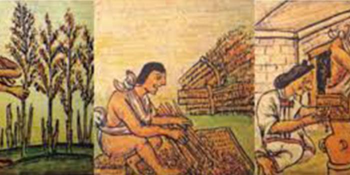 Cosecha, trilla y almacenamiento del huautli, códice Florentino